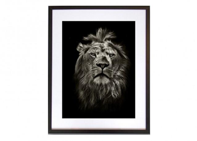 Portrait d'un lion - 40 x 50 cm