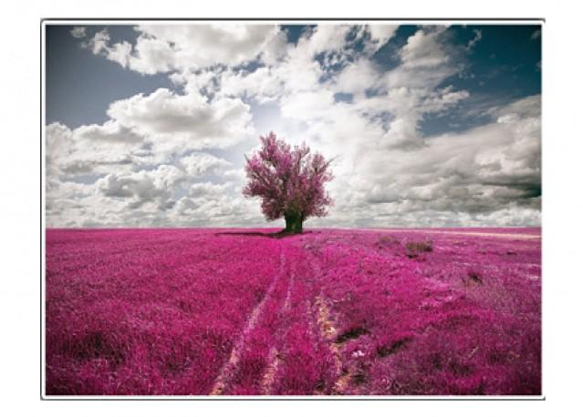 La vie en couleurs - 66 x 50 cm